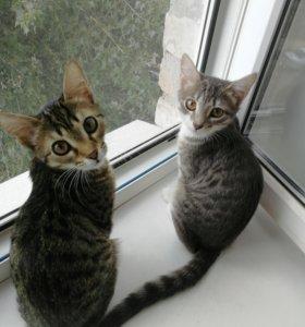 Кошки 4 месяца