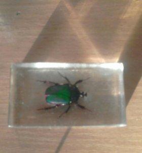 Изумрудный Азиатский жук