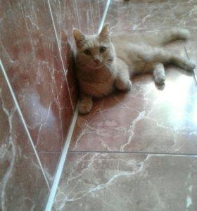 Котик Персик в добрые руки