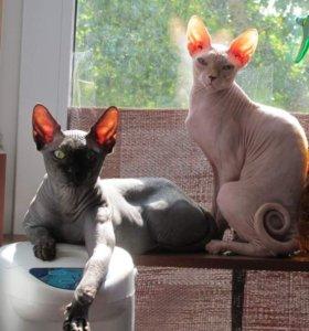 Даром кот и кошка