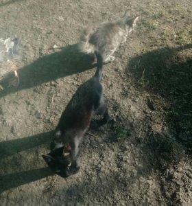 Кошки даром