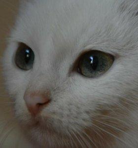 Космос котенок