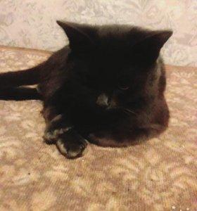 Кошка 4 года