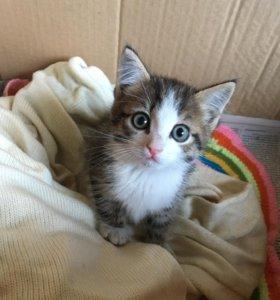 Отдам замечательного котёнка
