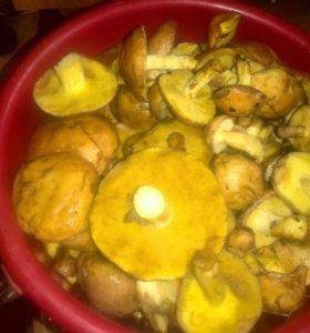 Продам грибы маслята и грузди
