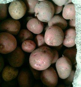 Мелкий картофель 6 ведер