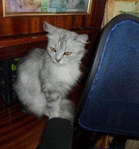 Кошка в надёжные руки