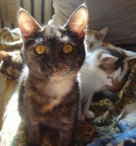 Отдам кошек и котят, сложная ситуация