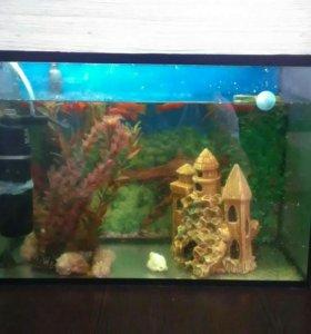 Крутой аквариум 👍