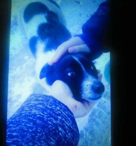 Собака 2года зовут Лапка