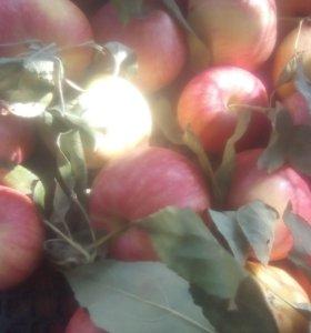 Яблочный жмых жом выжемки