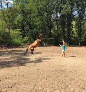 Требуется конюх