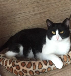 Ласковый котик ищет дом