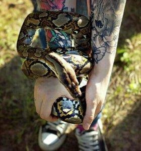 Аренда змей