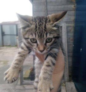 Отдам в добрые руки котёнка (котят)