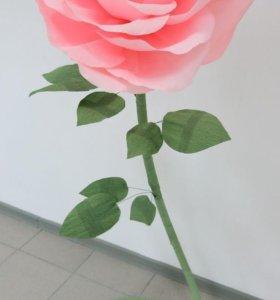 Большие цветы (1,5метра) Розы