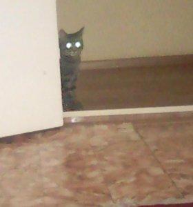 Отдам Жорика😋(Кот)