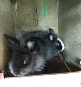 Три взрослых декоративных кролика.