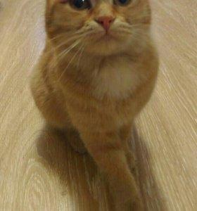 Кошка дружелюбная приученая к лотку!!