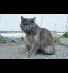 Кошка 1 год Мейси