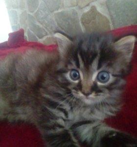 Котёнок
