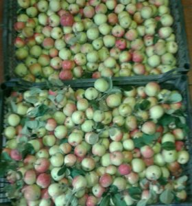 Яблочки