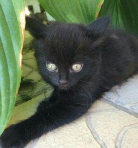 Котёнок (мальчик)