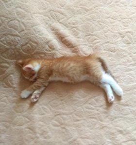 Котенок 2 месяца 15 дней