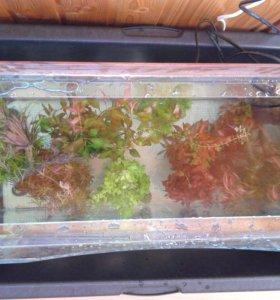 Прополка аквариумных растений.