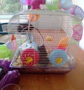 Крысы две девочки с клеткой