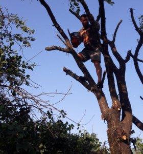 Спил деревьев уборка веток