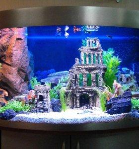 Чистка оформление и запуск аквариумов