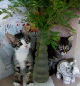 замечательные домашние котята