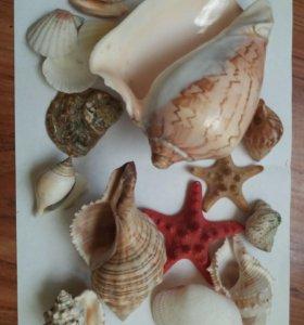Морские раковины и звёзды