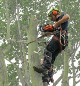 Помощник вальщика леса