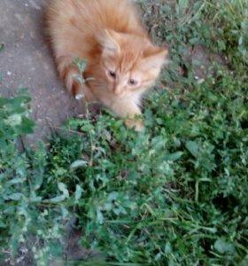 Котята ищут дом!