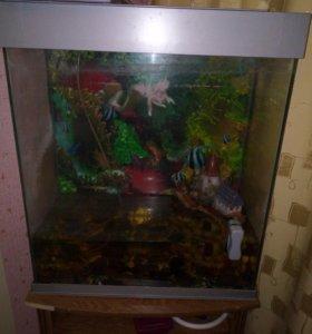 Продам аквариум большой, прямоугольной формы