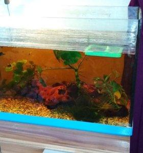Аквариум 60л с рыбками