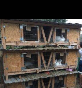 Распродажа кроликов и клеток