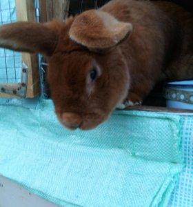 Кролики- молодняк