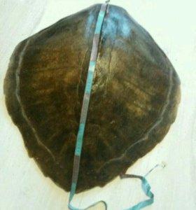Панцырь морской черепахи