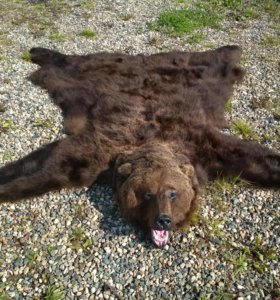 Ковер из шкуры медведя