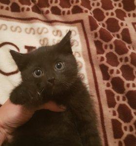 Котятки от кошки крысыловки