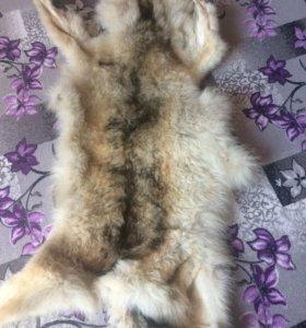 Продам Шкуру волка