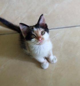 Котенок в добрые ручки!