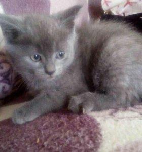 Котёнок мальчик 2месяца
