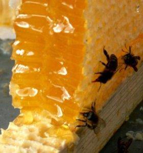 Мёд цветочнолиповый сбор 2018г.