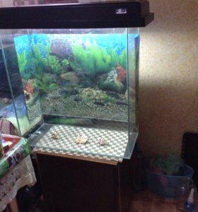 Террариум, аквариум