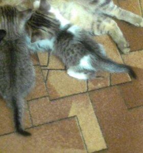 Хорошие котята ищут хорошую семью