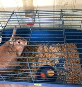 Продаю кролика вместе с клеткой